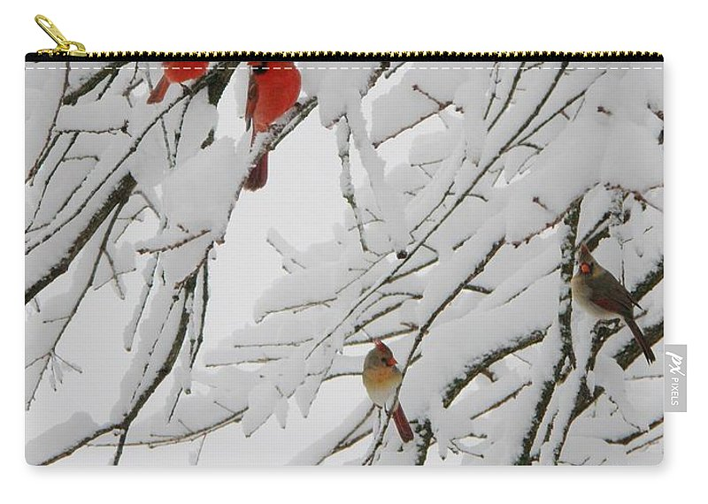 Red Birds Carry-all Pouch featuring the photograph Nature's Christmas Ornaments by Shannon Story