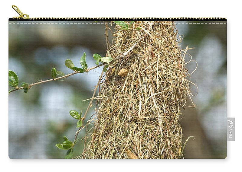 Animal Carry-all Pouch featuring the photograph Nest Of Altamira Oriole Icterus Gularis by Anthony Mercieca