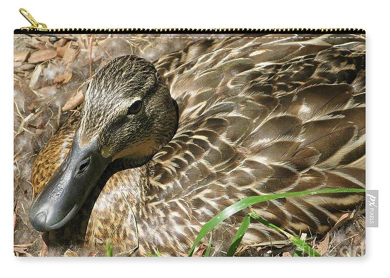 Mallard Carry-all Pouch featuring the photograph Nesting Mallard by Ann Horn