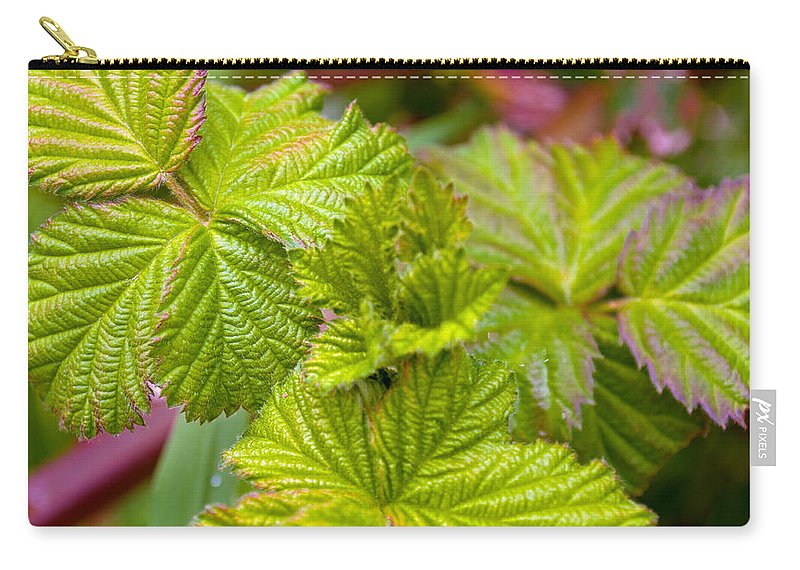 Green Carry-all Pouch featuring the photograph New Black Berry Leaves by Tikvah's Hope