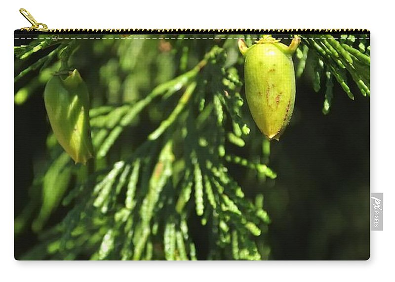 New Carry-all Pouch featuring the photograph New Growth 25848 by Jerry Sodorff