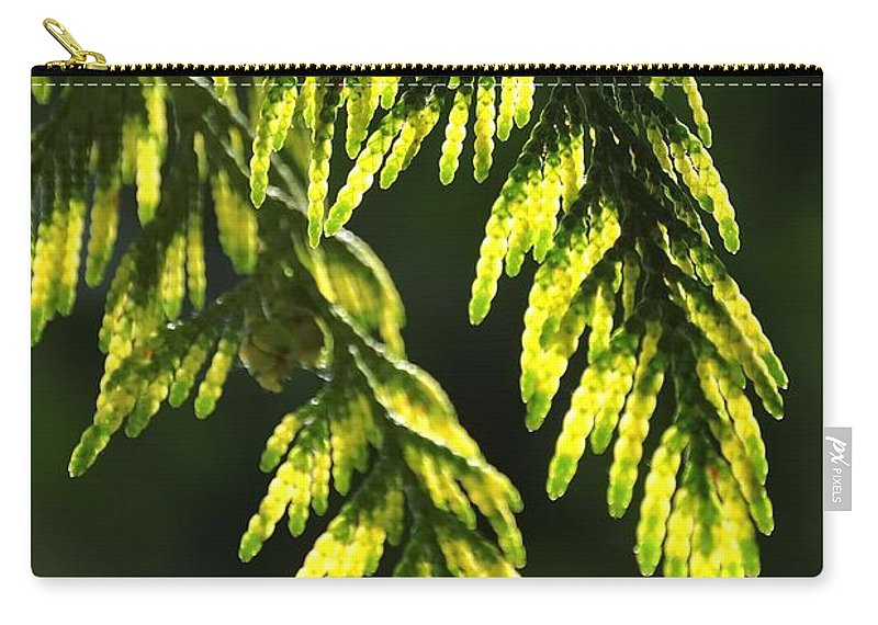 New Carry-all Pouch featuring the photograph New Growth 25859 by Jerry Sodorff