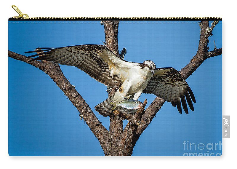 Osprey Carry-all Pouch featuring the photograph Nice Catch by Ronald Lutz