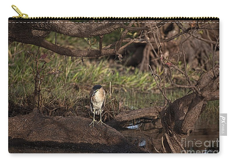 Night Heron Carry-all Pouch featuring the photograph Night Heron At Corroboree Billabong by Douglas Barnard