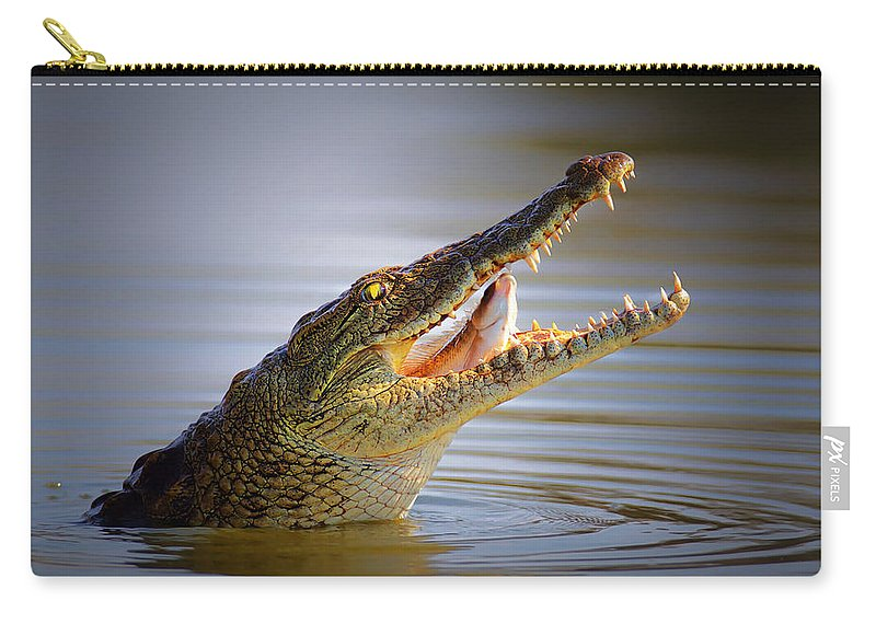 Crocodile Carry-all Pouch featuring the photograph Nile Crocodile Swollowing Fish by Johan Swanepoel