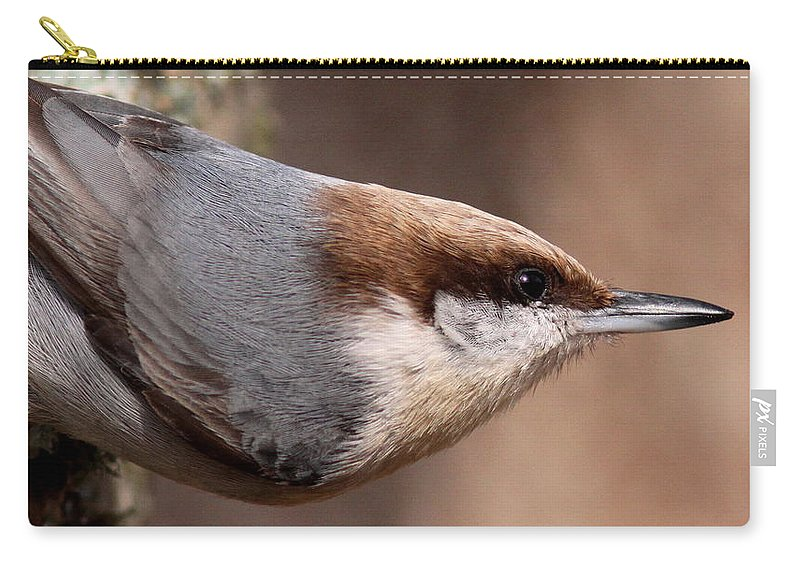 Nuthatch Carry-all Pouch featuring the photograph No Hands - Fayetteville - Nuthatch by Travis Truelove