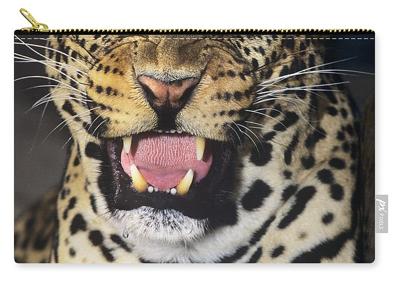 African Leopard Carry-all Pouch featuring the photograph No Solicitors African Leopard Endangered Species Wildlife Rescue by Dave Welling