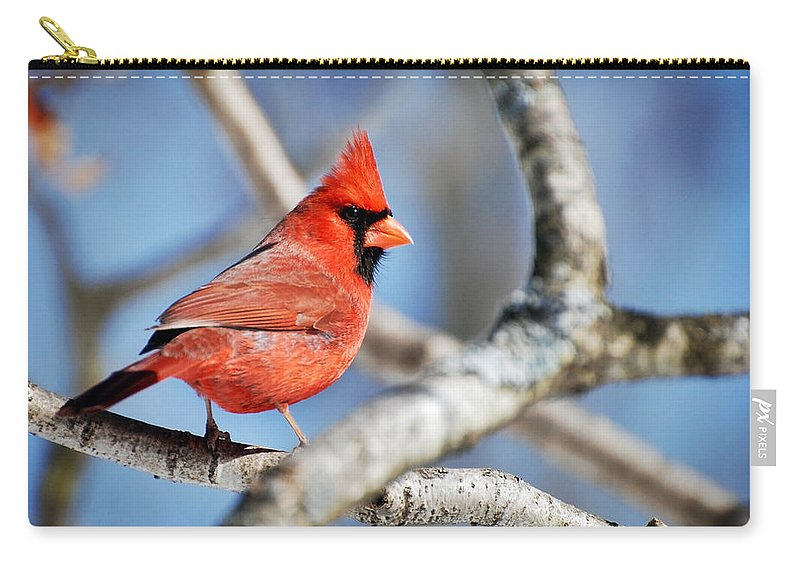 Bird Carry-all Pouch featuring the photograph Northern Cardinal Scarlet Blaze by Christina Rollo