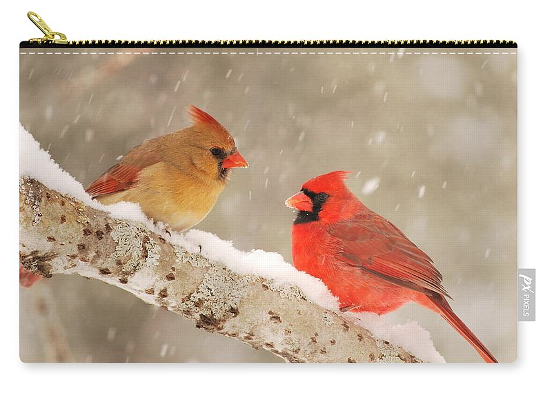 Cardinal Carry-all Pouch featuring the photograph Northern Cardinals by Harry Moulton