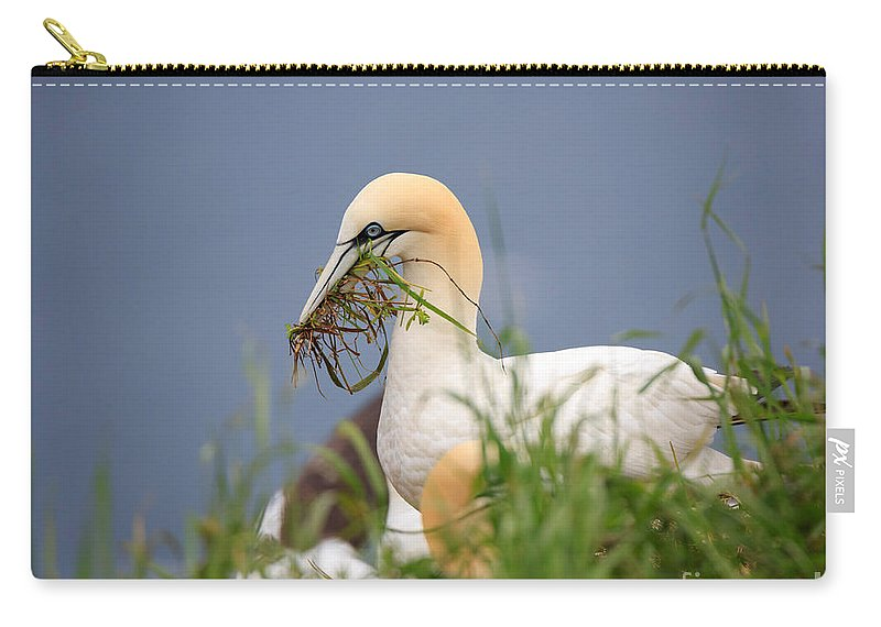 Northern Carry-all Pouch featuring the photograph Northern Gannet Gathering Nesting Material by Louise Heusinkveld