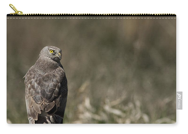 Harrier Carry-all Pouch featuring the photograph Northern Harrier At Rest by Michael Winn