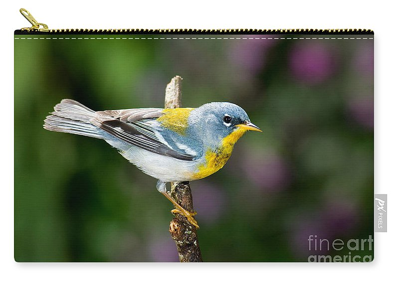 Northern Parula Carry-all Pouch featuring the photograph Northern Parula Warbler by Anthony Mercieca