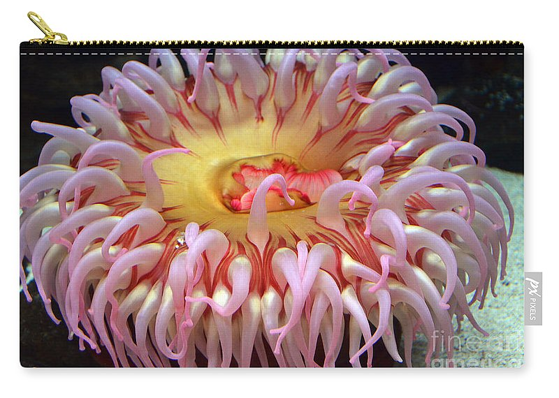 Northern Red Anemone Carry-all Pouch featuring the photograph Northern Red Anemone by Robert Meanor