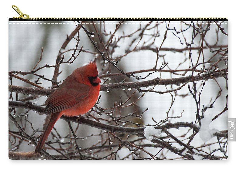 Salem Carry-all Pouch featuring the photograph Northern Red Cardinal In Winter by Jeff Folger