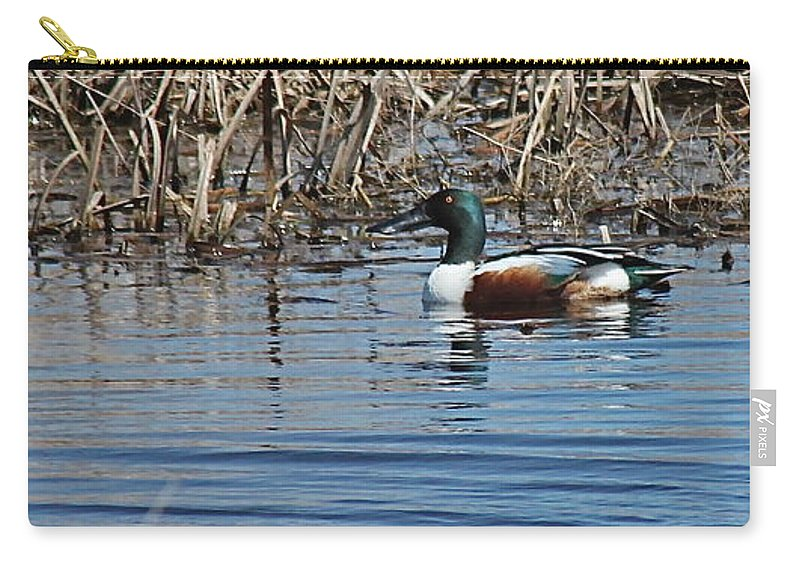 Birds Carry-all Pouch featuring the photograph Northern Shoveler Swim by Wayne Williams