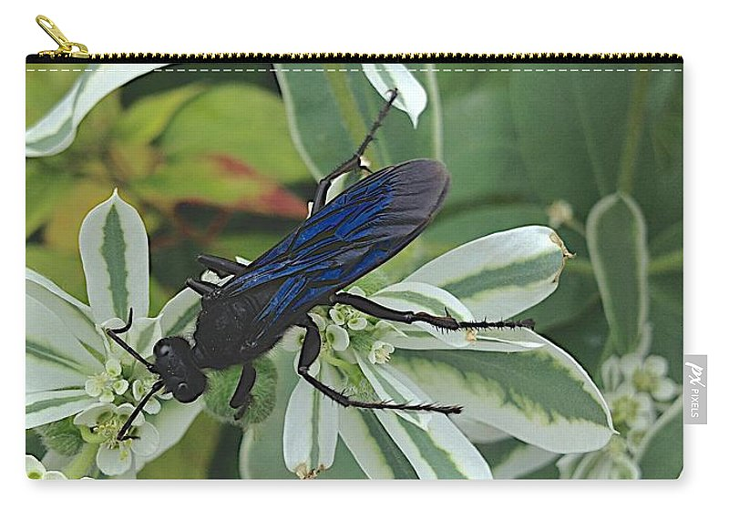Blue Insect Carry-all Pouch featuring the photograph Not Yet by Joseph Yarbrough