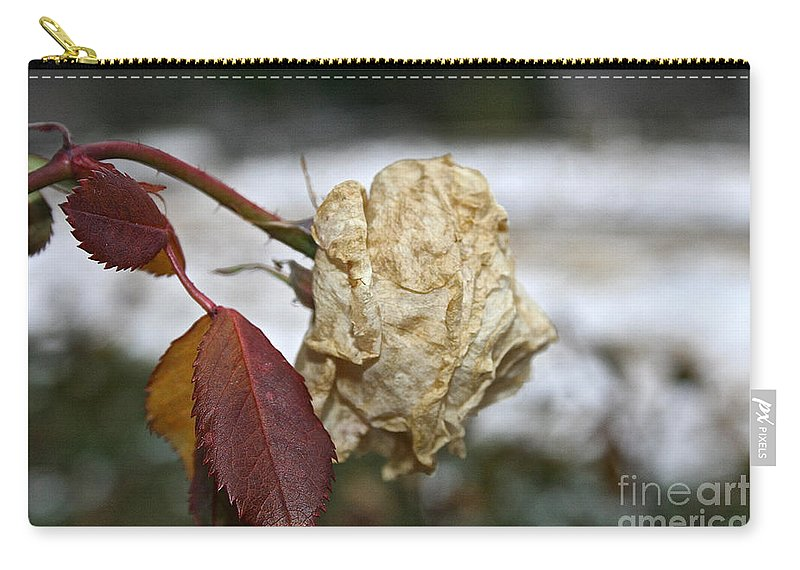 Flower Carry-all Pouch featuring the photograph November Snow Rose by Susan Herber