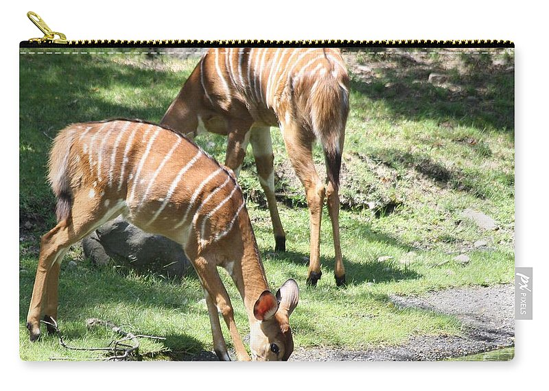 Nyalas At The Watering Hole Carry-all Pouch featuring the photograph Nyalas At The Watering Hole by John Telfer