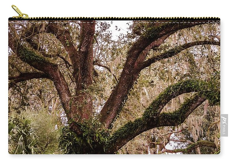Oak Tree Carry-all Pouch featuring the photograph Oak Tree by Zina Stromberg