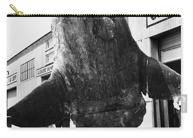 Ocean Carry-all Pouch featuring the photograph Ocean Sunfish Mola Mola Monterey 1946 by California Views Mr Pat Hathaway Archives