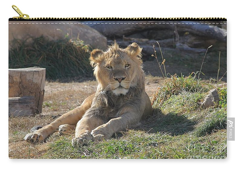 Lion Carry-all Pouch featuring the photograph Oh I Just Can't Wait To Be King by Tonya Hance