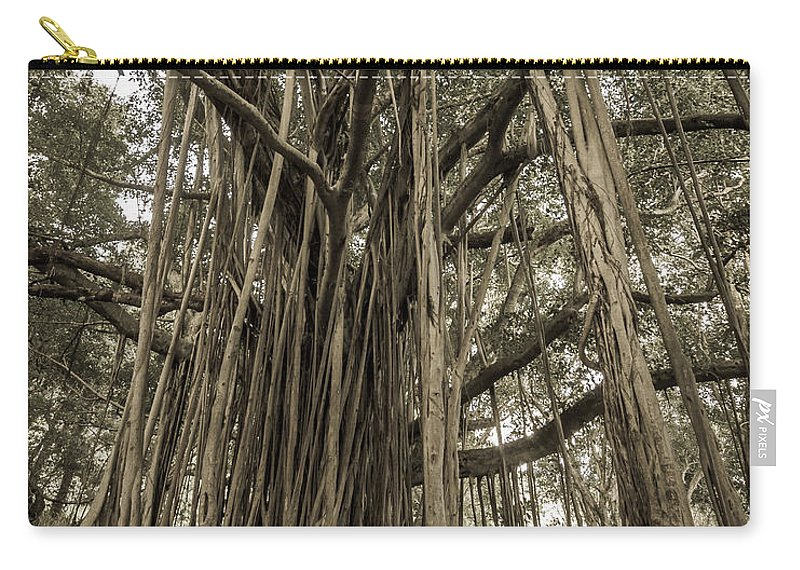 3scape Carry-all Pouch featuring the photograph Old Banyan Tree by Adam Romanowicz