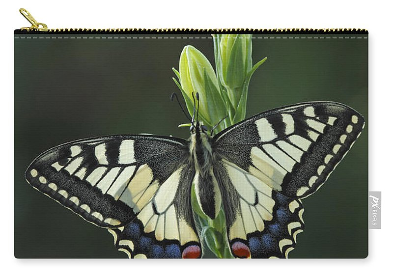 Silvia Reiche Carry-all Pouch featuring the photograph Oldworld Swallowtail Butterfly by Silvia Reiche