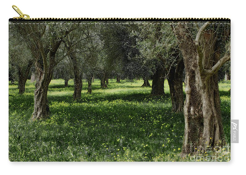 Olive Grove Carry-all Pouch featuring the photograph Olive Grove Color Italy by Mike Nellums