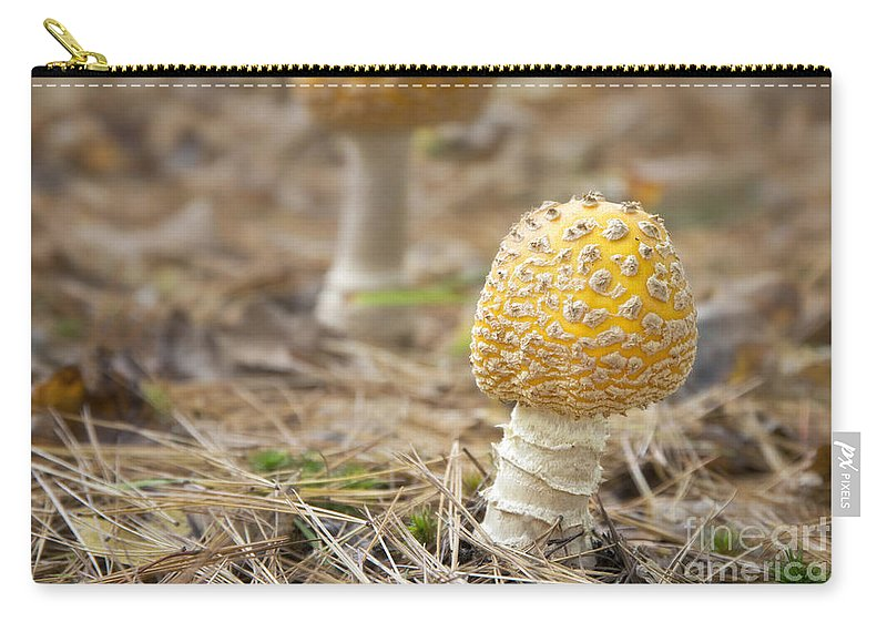Mushrooms Carry-all Pouch featuring the photograph On The Forest Floor by Claudia Kuhn
