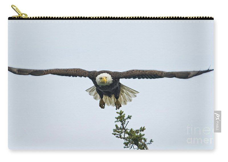 Eagles Carry-all Pouch featuring the photograph On The Move by Claudia Kuhn