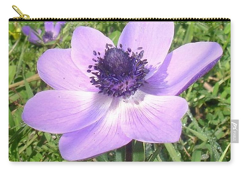 Anemone Coronaria Carry-all Pouch featuring the photograph One Delicate Pale Lilac Anemone Coronaria Wild Flower by Taiche Acrylic Art
