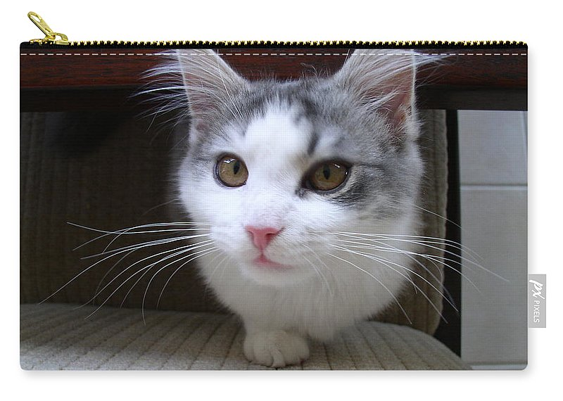 Cats Carry-all Pouch featuring the photograph One Legged Kitty by Gary Emilio Cavalieri