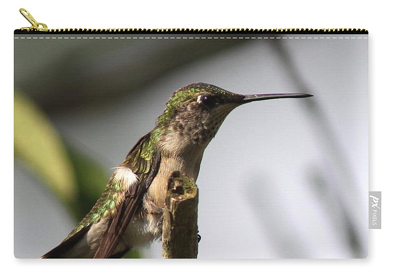 Acrobat Carry-all Pouch featuring the photograph One Out Of Place - Hummingbird by Travis Truelove