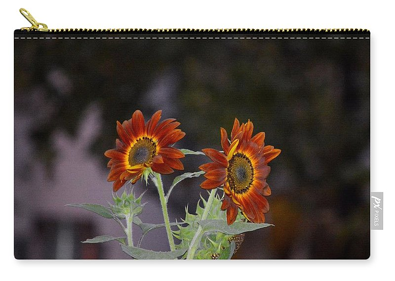 Orange Asters Carry-all Pouch featuring the photograph Orange Asters by Sonali Gangane