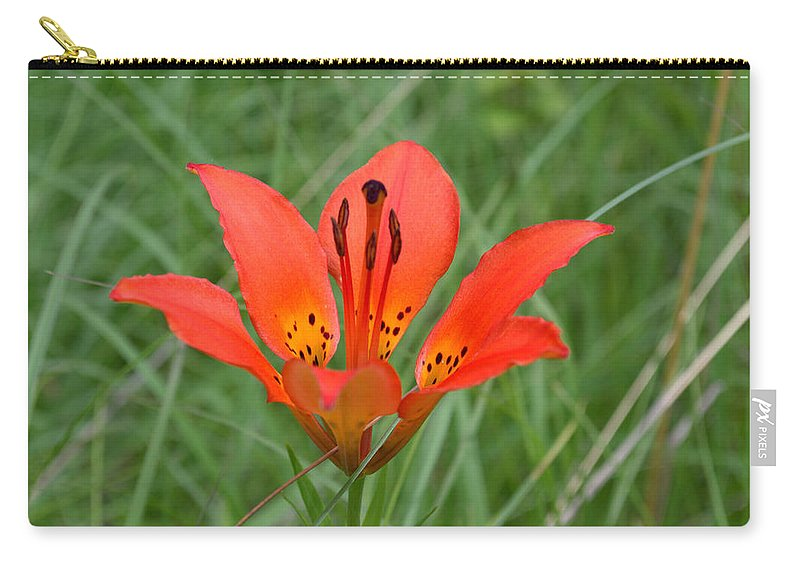 Flower Carry-all Pouch featuring the photograph Orange Beauty by Mark Hudon