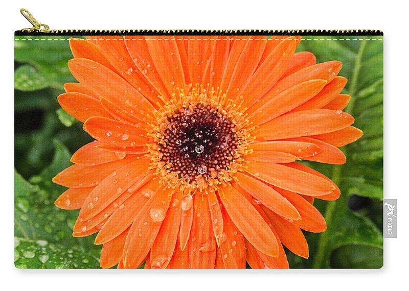 Gerber Daisy Carry-all Pouch featuring the photograph Orange Gerber Daisy 2 by Douglas Barnett