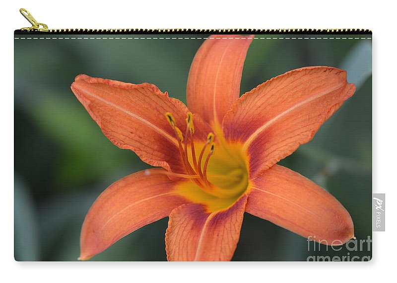 Honey Carry-all Pouch featuring the photograph Orange Lily Photo 6 by Barb Dalton