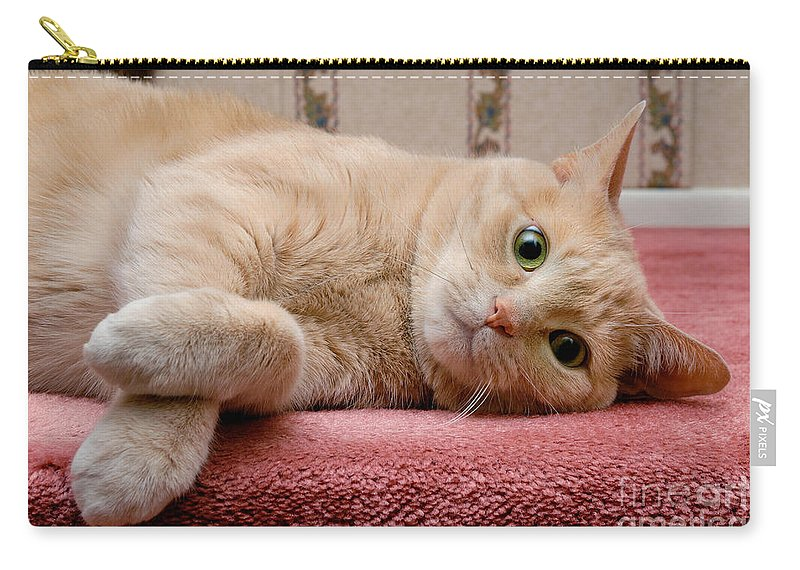 Alert Carry-all Pouch featuring the photograph Orange Tabby Cat Lying Down by Amy Cicconi