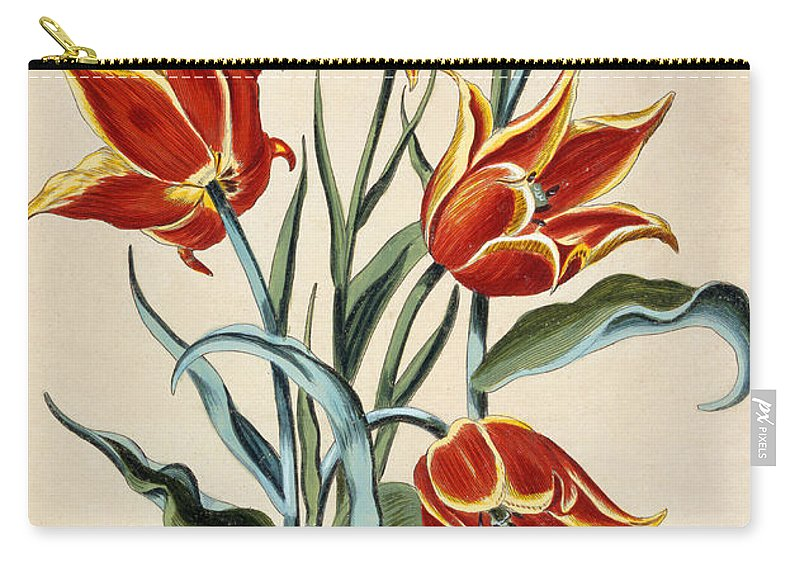 Tulip Carry-all Pouch featuring the painting Orange Tulip by Conrad Gesner