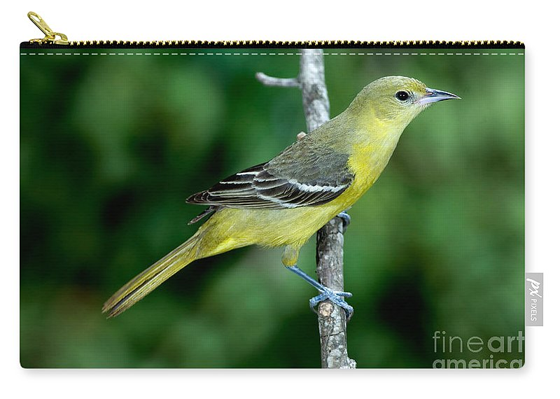 Animal Carry-all Pouch featuring the photograph Orchard Oriole Icterus Spurius Female by Anthony Mercieca