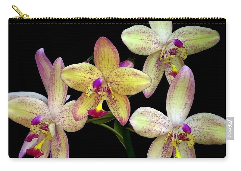 Orchid Carry-all Pouch featuring the photograph Orchid In Blossom by Zina Stromberg