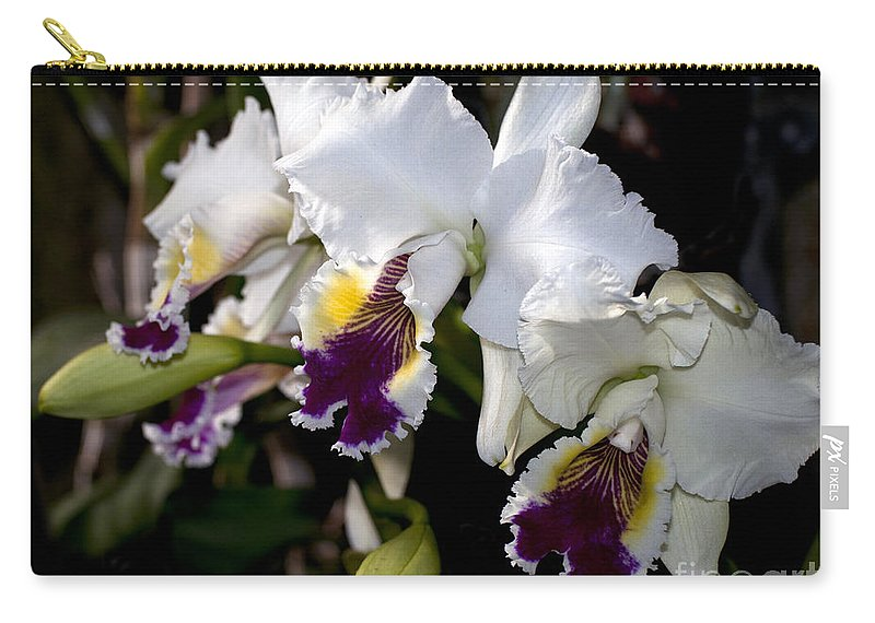 White Orchid Carry-all Pouch featuring the photograph Orchid Laeliocattleya Lucie Hausermann With Buds 4074 by Terri Winkler