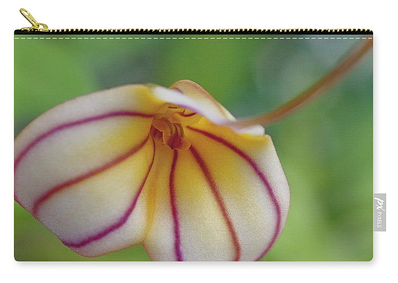 Orchid Carry-all Pouch featuring the photograph Orchids - Masdevallia Hybrid by Heiko Koehrer-Wagner