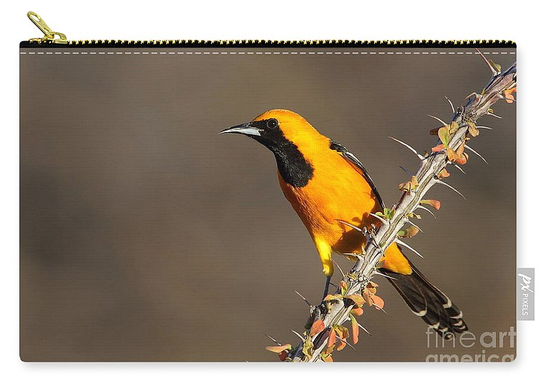 Oriole Carry-all Pouch featuring the photograph Oriole On Ocotillo by Bryan Keil