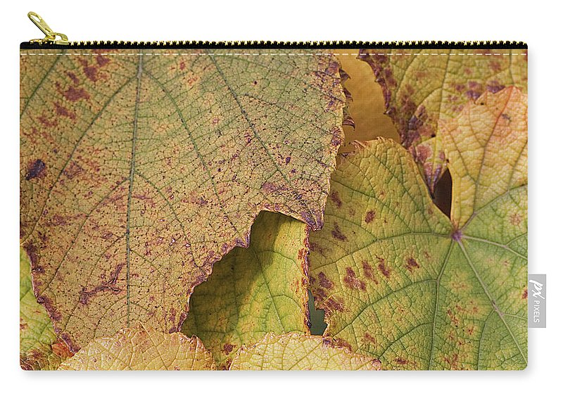 Coin Carry-all Pouch featuring the photograph Ornamental Vine by Kim Haddon Photography