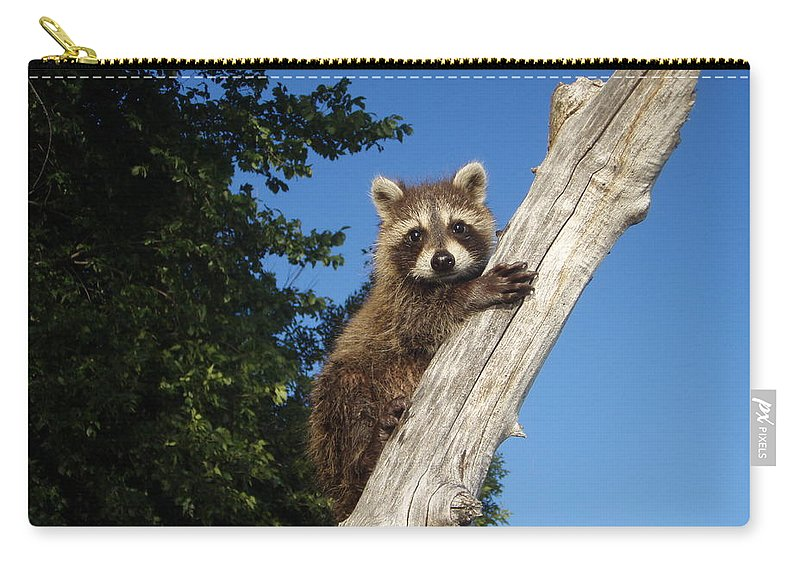 Jim Carry-all Pouch featuring the photograph Orphaned Raccoon by James Peterson