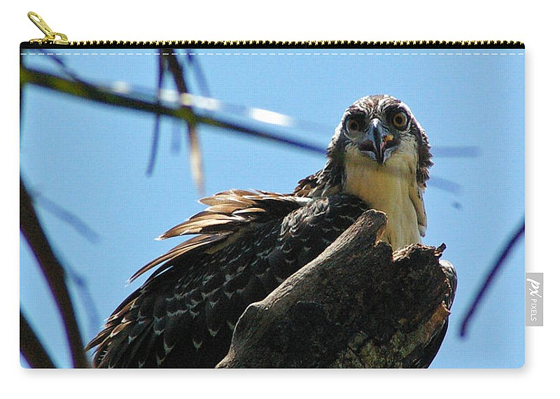 Osprey Carry-all Pouch featuring the photograph Osprey 1 by Nancy L Marshall