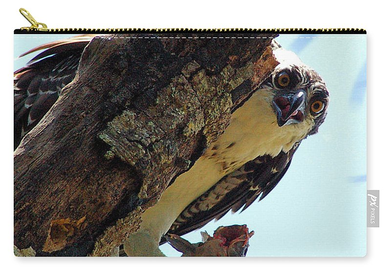 Osprey Carry-all Pouch featuring the photograph Osprey 3 by Nancy L Marshall