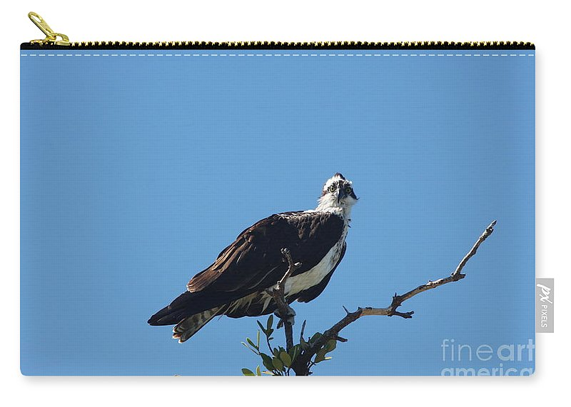 Osprey Carry-all Pouch featuring the photograph Osprey In A Tree by Christiane Schulze Art And Photography