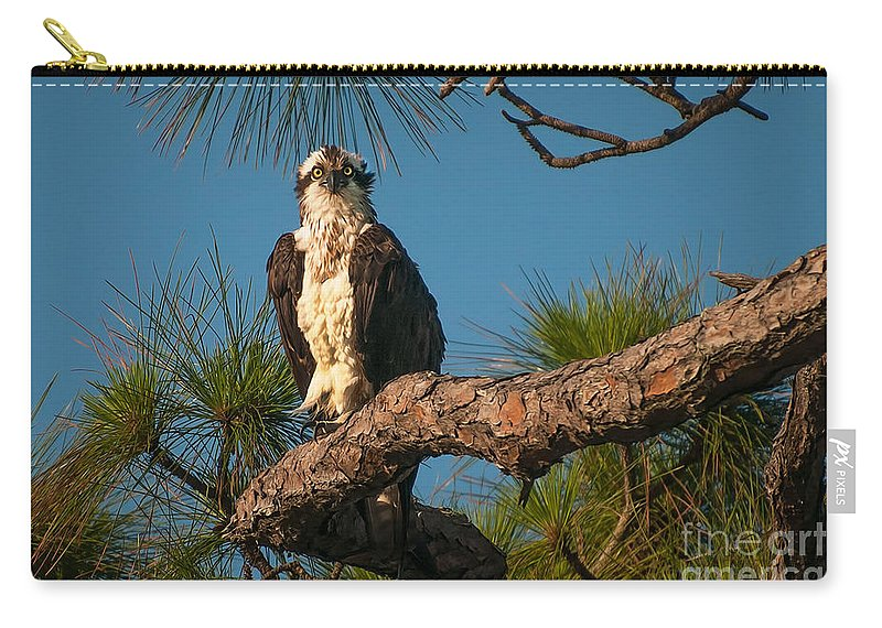 Osprey Carry-all Pouch featuring the photograph Osprey In Pine 1 by Photos By Cassandra
